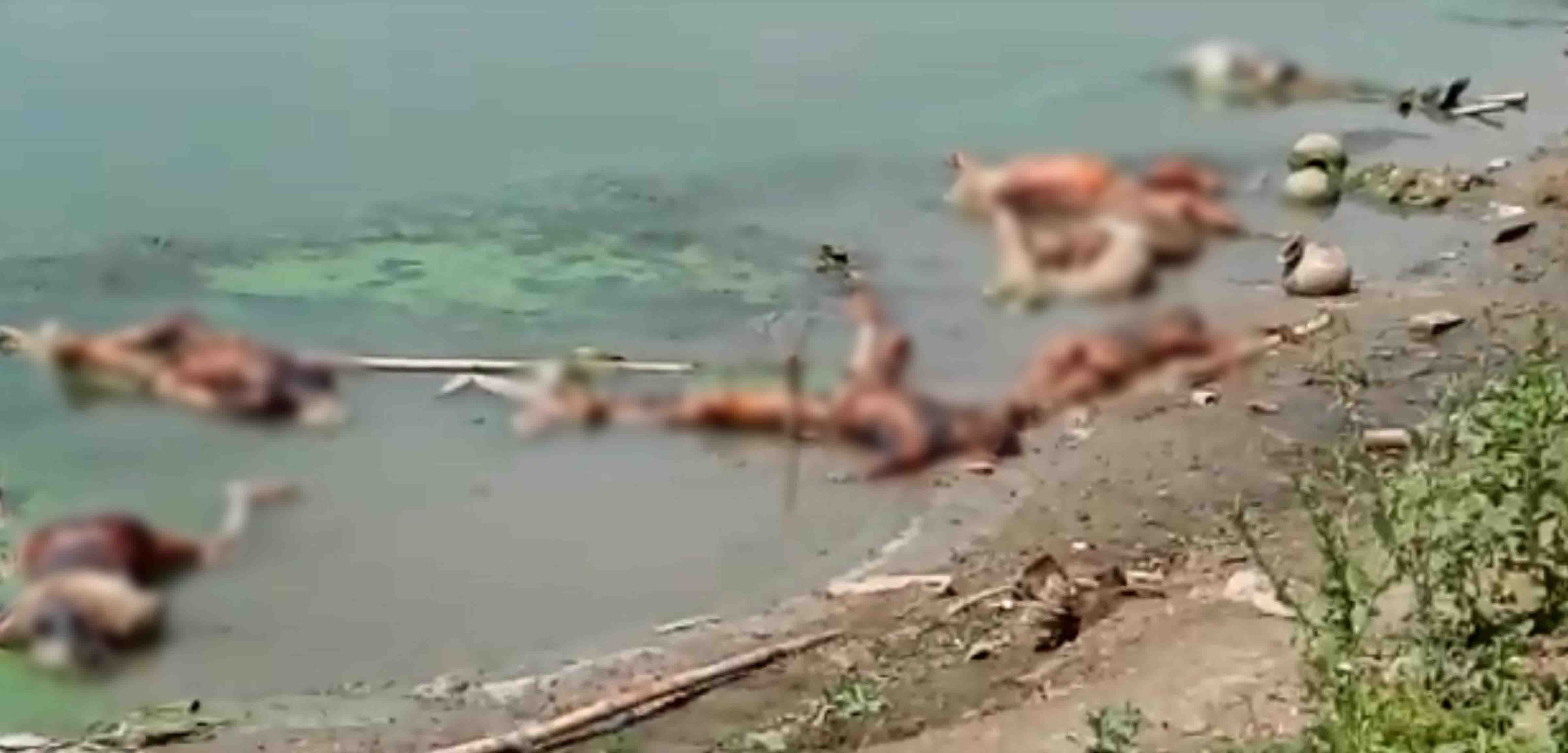 Centre asks UP, Bihar to prevent dumping of dead bodies in Ganga