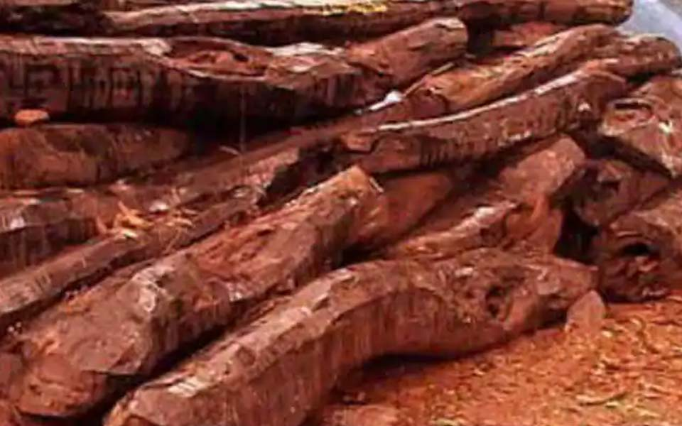 Bengaluru: Sandalwood worth Rs 6.20 lakh seized from Chinese man