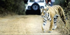 Similipal National Park opens for tourists after 7 months